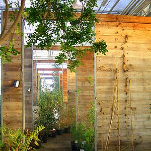 Inside a modern greenhouse