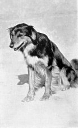 Gef - Image: Mona the sheep dog