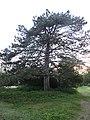Morgan Arboretum 12.jpg