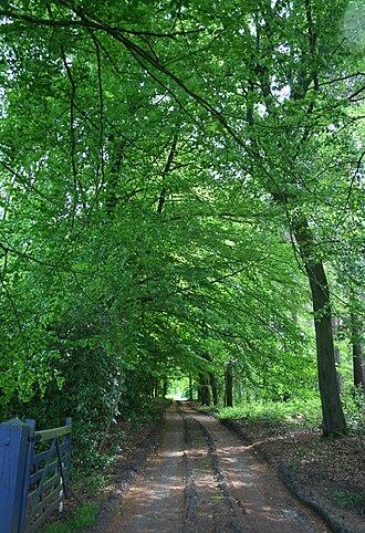 Cholmondeley, Cheshire - Moss Wood