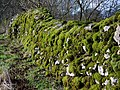 Moss covered stone wall, Ubley - geograph.org.uk - 1671489.jpg
