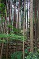 Moss forest above Ginkaku-Ji (7005740444).jpg