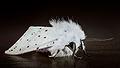 Moth 02 (MK).jpg