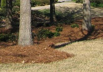 "Mulch - Pine needles used as mulch. Also called ""pinestraw"" in the southern US."