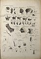 Muscles of the head, face, eye and neck; 45 figures. Pen and Wellcome V0008201EL.jpg