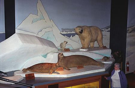 NANA Museum Of The Arctic(js)02.jpg