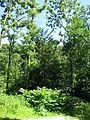 ND 611.070, Eibe, 2, Wolfsanger-Hasenhecke, Kassel.jpg