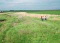 NRCSIA00039 - Iowa (2281)(NRCS Photo Gallery).tif