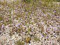 NTS - Wild Flowers 035.jpg