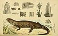 Natural history of Victoria (6007970927).jpg