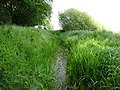 Naturschutzgebiet Hetter-Millinger Bruch PM18-10.jpg