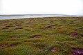 Nave Island, Islay - geograph.org.uk - 340975.jpg
