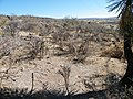 Near Ojo Caliente?, Aguascalientes (5726172511).jpg