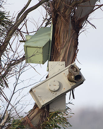 Orange-bellied parrot - Nesting boxes intended for use by orange-bellied parrots in Melaleuca, South West Tasmania