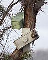 Neophema chrysogaster Nesting Box - Melaleuca.jpg