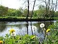 Nettles and Dandelions, Omagh - geograph.org.uk - 417015.jpg