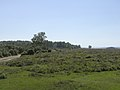 New Forest heathland near the Bramshaw Telegraph - geograph.org.uk - 27295.jpg