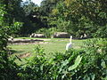 New Orleans 2007 NOLA Zoo Rhinos.jpg