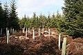New Planting - geograph.org.uk - 1232358.jpg