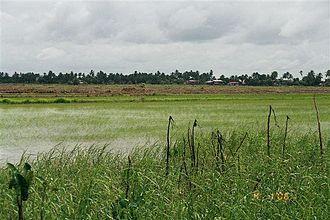 Nickerie District - Image: Nickerie rijstveld