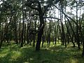 Niji Pine Grove 7.jpg