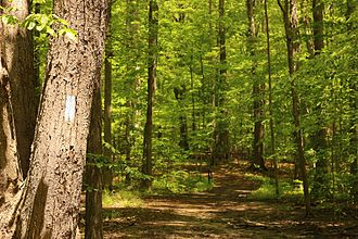 Buckeye Trail - Image: North Chagrin Metropark Buckeye Trail