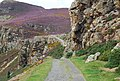 North Wales Path north of the Sychnant Pass - geograph.org.uk - 1479232.jpg