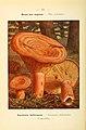 Nouvel atlas de poche des champignons comestibles et vénéneux (Pl. 24) (6459633245).jpg