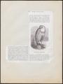 Nyctea nivea - 1872 - Print - Iconographia Zoologica - Special Collections University of Amsterdam - UBA01 IZ18400021.tif