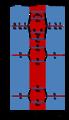O2 분자 궤도 도표.png