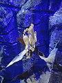 OB-SEA LIFE-Katzenhaieier.jpg