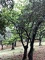 Oaks downhill.jpg