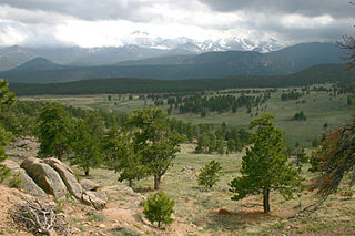 Rocky Mountain ponderosa pine forest