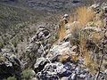 Opposite Linares Del Rio Nazas (5726324366).jpg