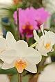 Orchid - Botanical Garden Rio de Janeiro 1.jpg