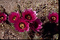 Organ Pipe Cactus National Monument ORPI4654.jpg
