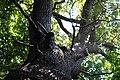 Pădurea Domnească EGO 5816.jpg