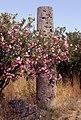 Paestum-140-Saeule-Oleander-1986-gje.jpg