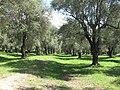 Parc du Pian (Menton) 2.jpg