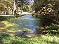Park dworski (obecnie park miejski im. Rodu Łaskich) - starorzecze (15 20120930242).jpg