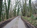 Passing through Lodge Wood - geograph.org.uk - 330834.jpg
