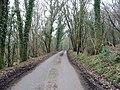 Passing through Lodge Wood - geograph.org.uk - 330834.jpg