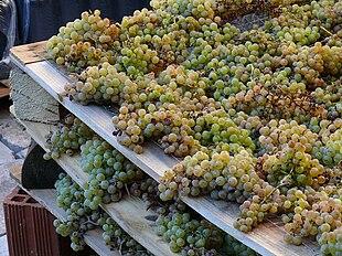 Appassimento dell'uva su graticci