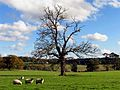 Pastoral Tranquility near Winterbourne - geograph.org.uk - 74101.jpg