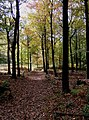 Path in the Wyre Forest - geograph.org.uk - 1557222.jpg