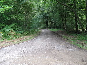 English: Path junction in Pheasant Copse At th...