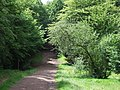 Path through Epping Forest - geograph.org.uk - 2523480.jpg