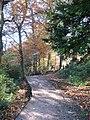 Path through the woods - geograph.org.uk - 1043650.jpg