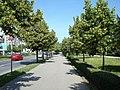 Pe Bulevard (31 mai 2008) - panoramio.jpg