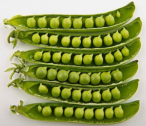 English: Studio photo of peas in their pods.